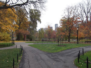 Boston common: two paths diverged in a wood...