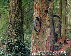 bike in a tree