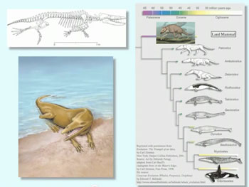 hard evidence: the evolution of whales