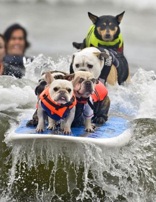 surf dogs!