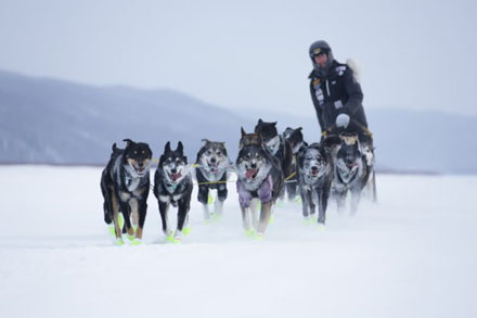 Brent Sass and his team, on the Yukon