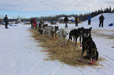Mitch Seavey's team taking a break in Nikolai